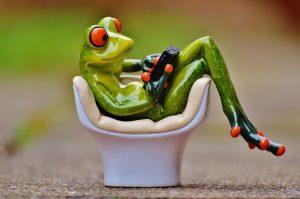 frog-1234544_1920