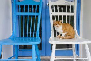 cat-860445_1280