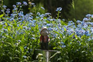 forget-me-not-1386333_1280